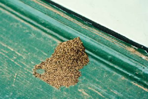 Signs Of Termites In Home Termite Droppings Mounds